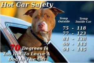 Leaving dogs in cars